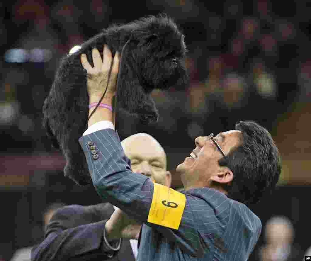 Ernesto Lara merayakan kemenangan Banana Joe, seekor anjing jenis Affenpinscher, dalam lomba anjing Westminster Kennel Club ke-137 di Madison Square Garden, New York (12/2).