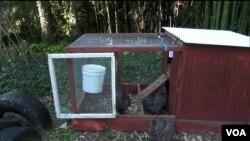 미 도시 외곽에 닭장 대여 사업 등장
