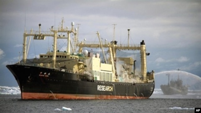 FILE - Sea Shepherd ship Bob Barker (R) takes position at the stern of the Japanese factory ship Nisshin Maru (L) to block the slipway in the Southern Ocean, February 10, 2011.