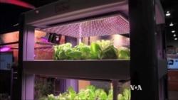 Smartphone Helps Grow Vegetables