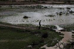 Bokaan Oromiyaatti roobuutti jiru midhaan qarxii kuma 18 caalaa balleesse