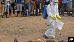 Un trabajador de la salud rocía desinfectante a cuerpo de una víctima de ébola en Liberia.