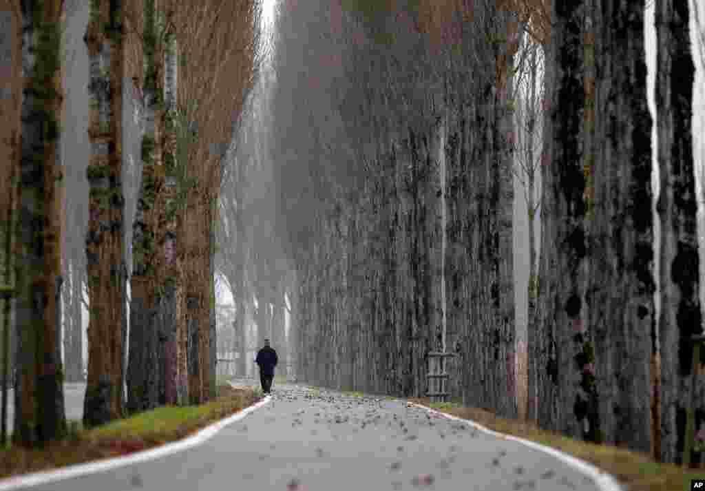 A man walks on a road on the Reichenau island near Constance, Germany.