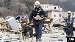 Премия принца Астурийского присуждена японским спасателям