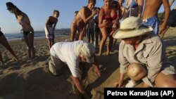 People surround marine biologists Andreas Demetropoulos, and Myroula Hadjichristophorou as they try to pull out sea turtles that just hatched from a nest on Cyprus' Lara Beach.