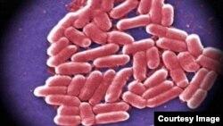 Bacteria (CDC)