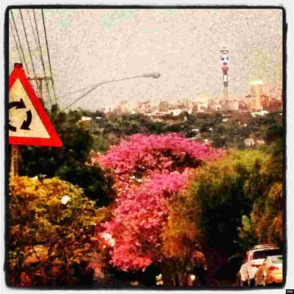 Johannesburg is a mix of urban cityscapes and nature.