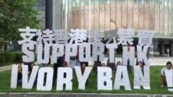 香港动保团体促立法会支持象牙禁贸