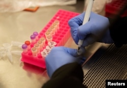 Researchers work with coronavirus samples as a trial begins to see whether malaria treatment hydroxychloroquine can prevent or reduce the severity of the coronavirus, at the University of Minnesota in Minneapolis, March 19, 2020.
