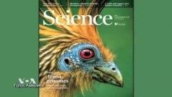 Ученые совершили прорыв в изучении эволюции птиц