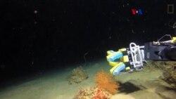 Agarraderas suaves para investigación subacuática