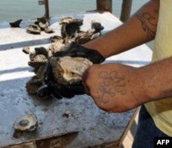Industrija ribe trpi zbog ekološke katastrofe u Meksičkom zalivu