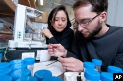 University of Chicago Chemistry professor Ka Yee Lee, postdoctoral scholar Niels Holten-Andersen and team have invented a new synthetic mussel-inspired material that exhibits both strength and reversibility.