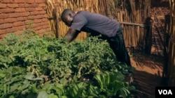 Malawi Home Gardens