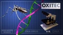 Could Self-destructing Mosquitos Help Control the Zika Virus?