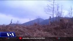 Shqipëri, shtohet gjuetia e paligjshme gjatë pandemisë