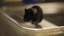 Cura para diabetes en animales