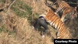 宁波雅戈尔动物园老虎咬死游客