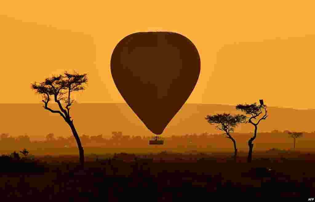 A hot air balloon carrying tourists is pictured during the annual wildbeest migration in the Masai Mara game reserve in Kenya.