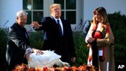 El presidente Donald Trump con la primera dama Melania Trump, le concede el perdón a uno de los pavos de Acción de Gracias, durante una tradicional ceremonia en la Casa Blanca.
