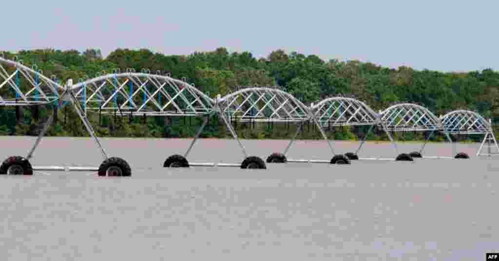 Соевые поля в штате Миссисипи