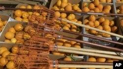 Menurut laporan LSM Institution Mechanical Engineers di Inggris, di negara-negara maju, seperti di Eropa dan Amerika, praktek pertanian yang lebih efisien memastikan pangan yang diproduksi itu dapat lebih banyak mencapai konsumen (foto: dok).