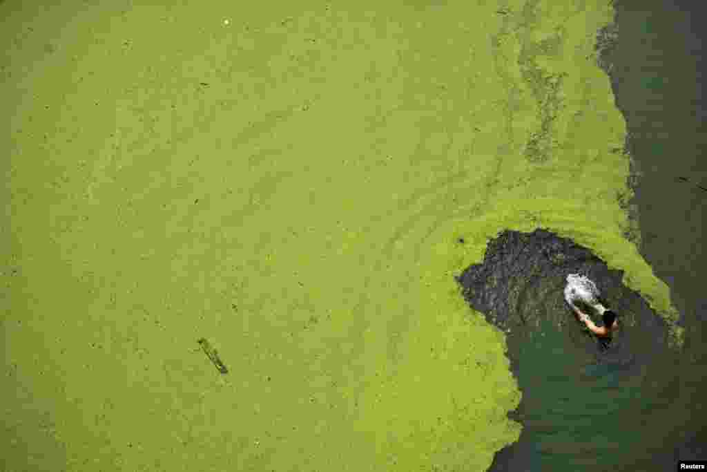 A man swims in algae-covered Han River in Wuhan, Hubei province, China, June 11, 2014.