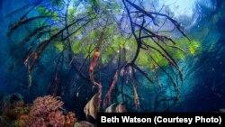 Terumbu-terumbu karang di Raja Ampat, Papua.