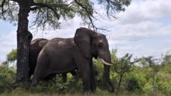 Protecting Africa's Elephants