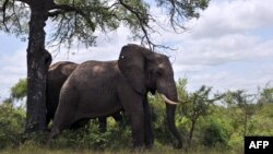 Protecting Africa's Elephants