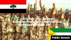 Lola Dangaa Naannolee Oromiyaa fi Somalee Keessa Humnoota Kamfaatu Jira?