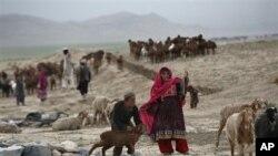 قربانی کے جانوروں کی افغانستان اور ایران سمگلنگ