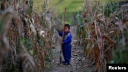 FILE - A North Korean boy holds a spade in a corn field in the Soksa-Ri collective farm in the South Hwanghae province.