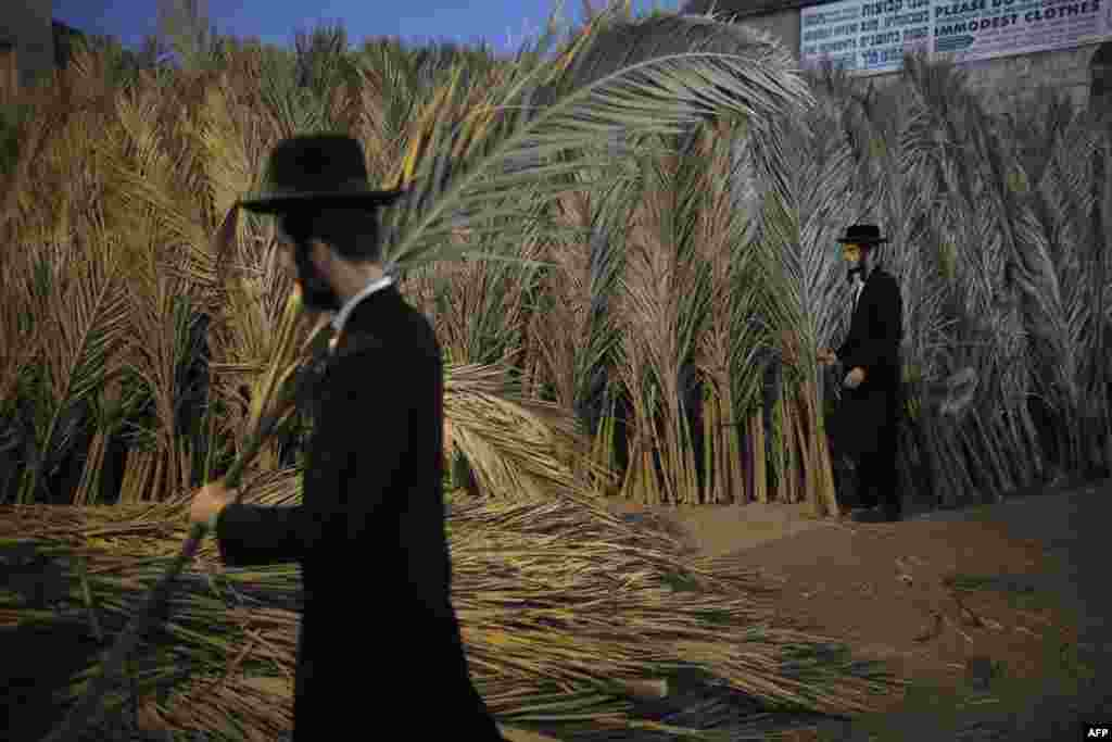 An Ultra-Orthodox Jewish man carries palm branches for the roof of his Sukkah, a temporary hut constructed for use during the week-long Jewish festival of Sukkot, the feast of the Tabernacles, in the Ultra-Orthodox neighborhood of Mea-Shearim in Jerusalem, Oct. 2, 2017.