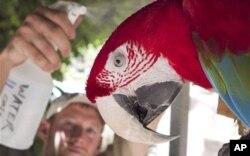 حتی پرندگان نیز از این گرمای شدید به ستوه آمده اند.
