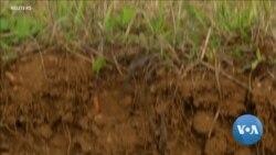 Using Garbage to Rebuild Tired Soil