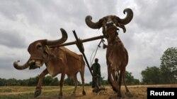 지난 6월 인도 아메다바드 외곽지역의 농촌 풍경. (자료사진)