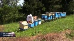 Mladi pčelar iz Bratunca: Pčele su najsavršenija bića
