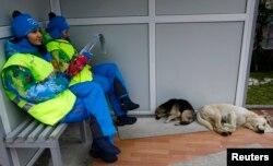 Olympics volunteers sit near two stray dogs outside the Gorki media center in Krasnaya Polyana near Sochi, Russia, Jan. 30, 2014.