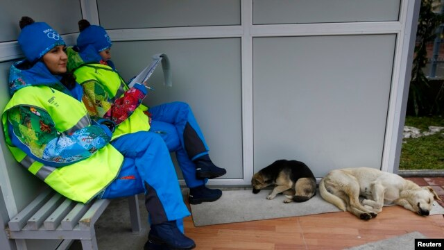 Olympics volunteers sit near two stray dogs outside the Gorki media center in Krasnaya Polyana near Sochi, Russia, Jan. 30, 2014.