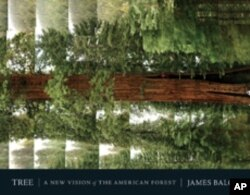 For his book 'Tree: A New Vision of the America Forest,' James Balog snapped this picture of a Giant Sequoia while rappelling down from the canopy.