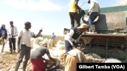 John Buhari-Waziri, coordonnateur général dirige les opérations de la start-up Thrive Agric (VOA/ Gilbert Tamba).