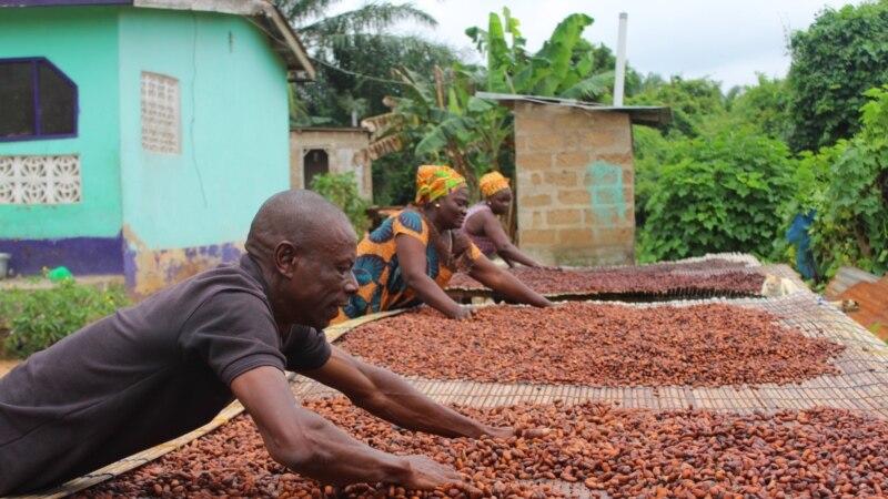 La Côte d'Ivoire et le Ghana doivent contrôler leurs approvisionnements en cacao