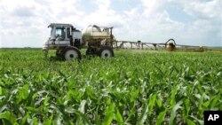 Mặc dù vẫn còn là con đường dài cho những cánh đồng ngô và đậu nành của Illinois tới Cuba, nhưng nông dân Wendell Shauman rất hoan nghênh việc bình thường hóa mối quan hệ ngoại giao.