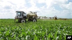 Seorang petani jagung di Illinois menyemprot ladangnya untuk membasmi tanaman penggangu (foto: dok).
