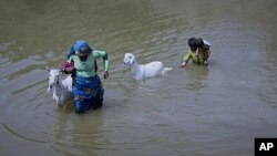 A woman pulls a goat as she wades out of the flood waters in the Badin district of Pakistan's Sindh province, September 22, 2011.