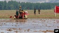 지난해 5월 북한 남포 협동통장에서 농부들이 모내기를 하고 있다.