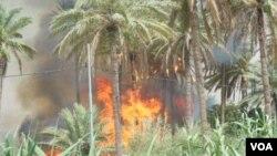 Orchards burn in Khanaqin/ فۆتۆ. سهروهر عهلی