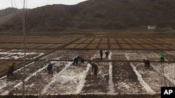朝鲜人在田野操劳