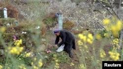 清明节给在汶川大地震中去世的亲人扫墓的男子(2018年4月23日路透社)